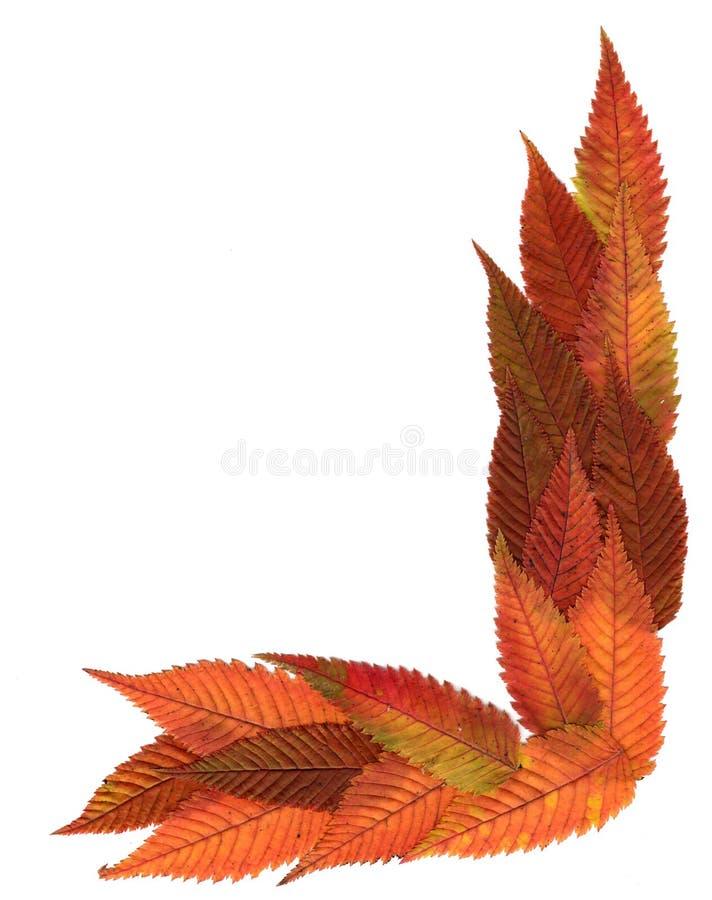 Folhas decorativas pressionadas multicoloridos em formulários da geometria imagem de stock