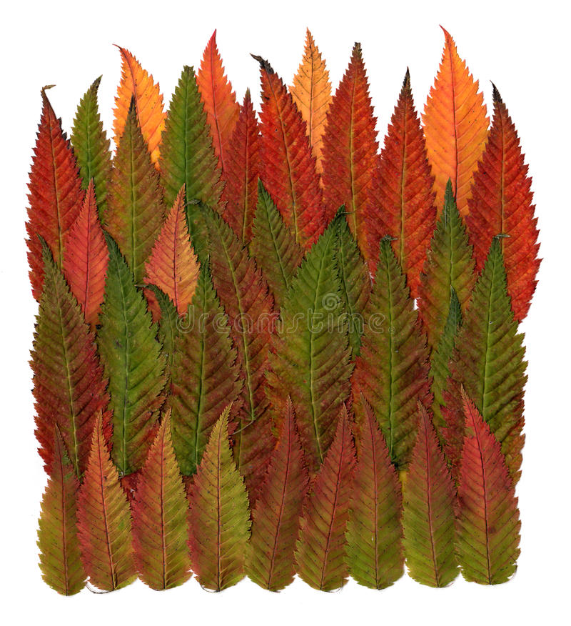 Folhas decorativas pressionadas multicoloridos em formulários da geometria imagem de stock royalty free
