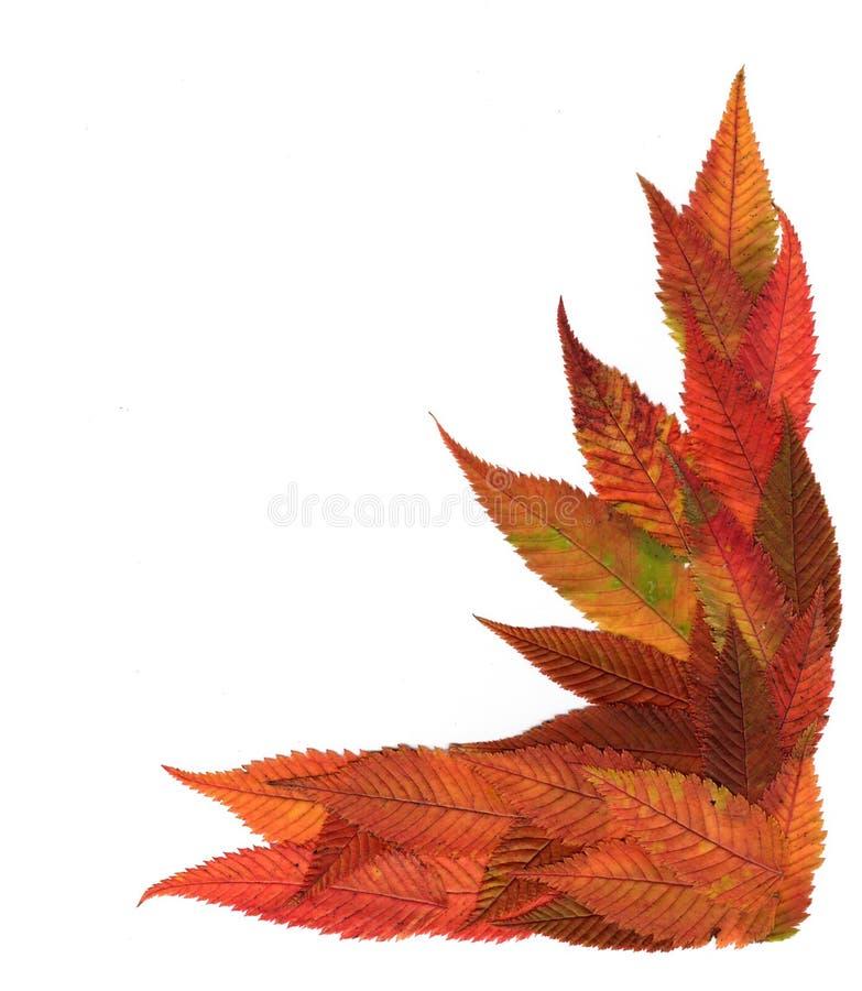 Folhas decorativas pressionadas multicoloridos em formulários da geometria imagens de stock