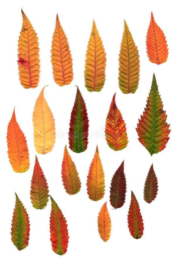 Folhas decorativas pressionadas multicoloridos em formulários da geometria foto de stock royalty free