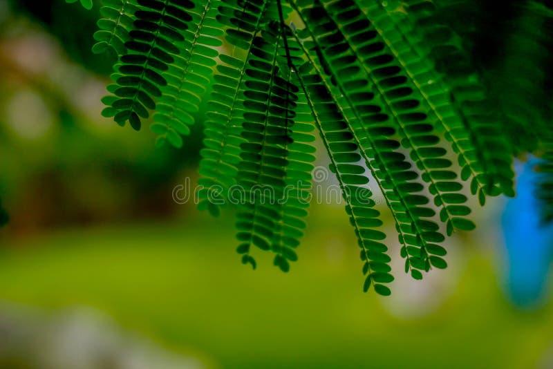 Folhas delicadas foto de stock