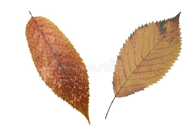 Folhas desvanecidas sujas abstratas foto de stock