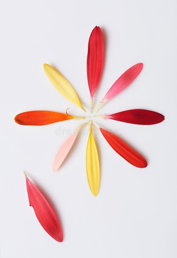 Folhas diferentes da flor da cor fotografia de stock
