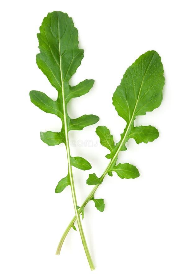 Folhas do Arugula foto de stock