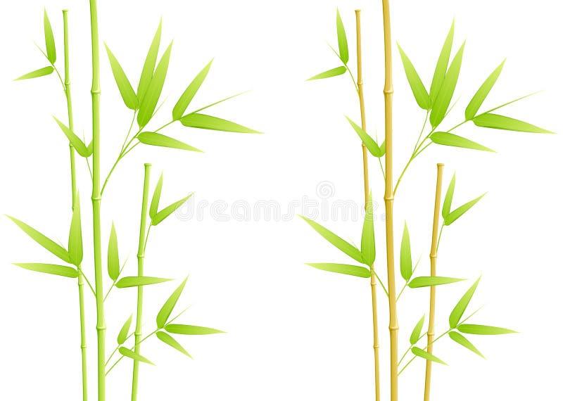 Folhas do bambu ilustração stock