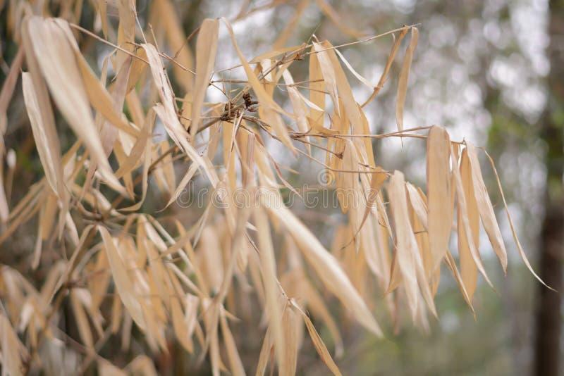 Folhas do bambu na árvore de bambu foto de stock