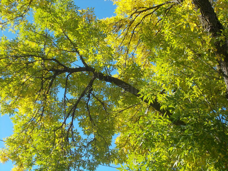 Folhas do céu azul e do verde fotografia de stock