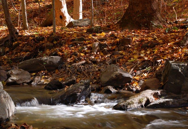 Folhas do córrego & de outono da floresta fotografia de stock royalty free