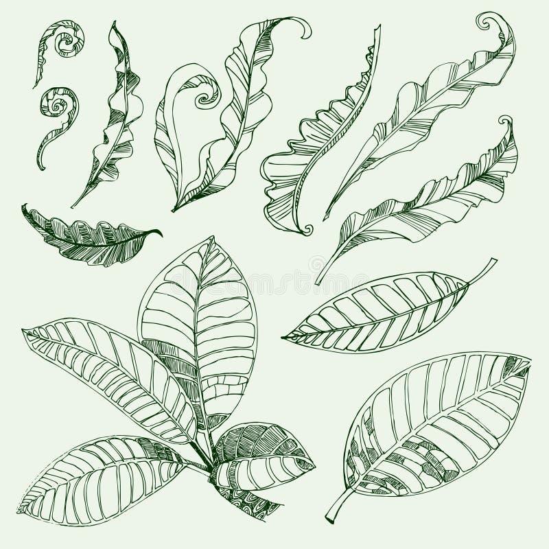 Folhas do café e do fern ilustração do vetor