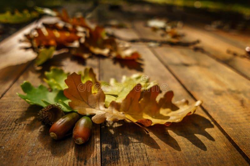Folhas do carvalho no outono fotografia de stock royalty free