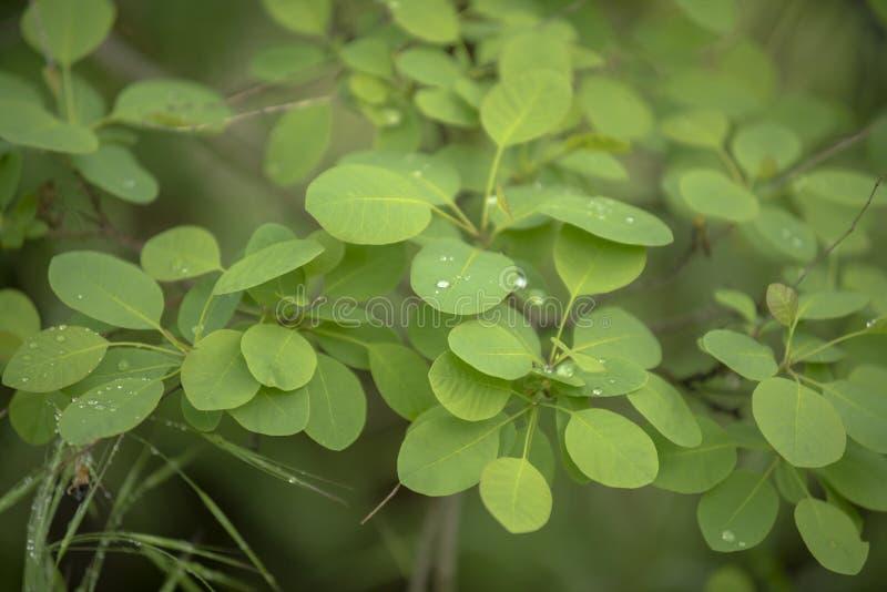 Folhas do close up verde fresco da hera fotos de stock royalty free
