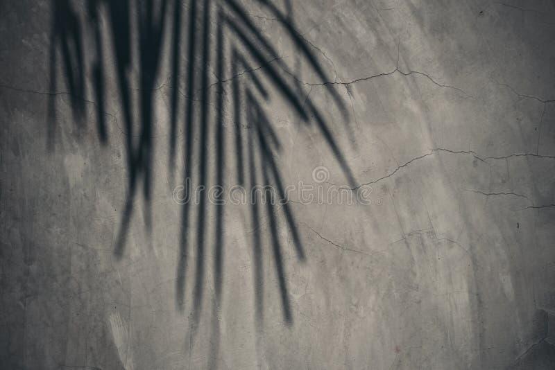 Folhas do coco da sombra protegidas na parede mortal concreta ou desencapada fora da construção imagem de stock royalty free