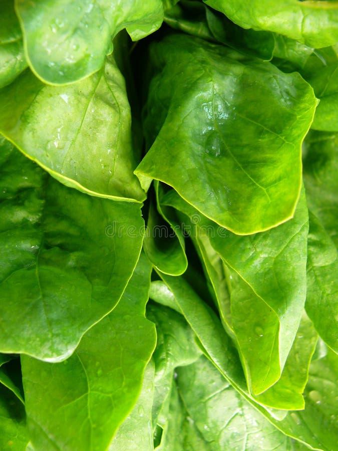 Folhas do espinafre imagens de stock