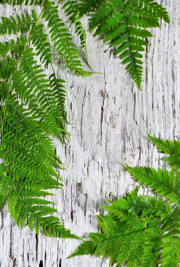 Folhas do Fern na madeira velha fotos de stock royalty free
