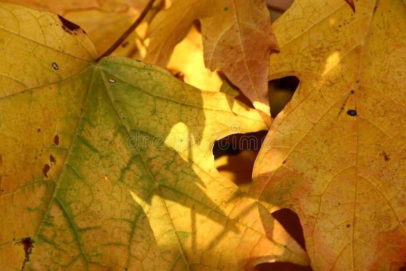 Folhas do fundo foto de stock