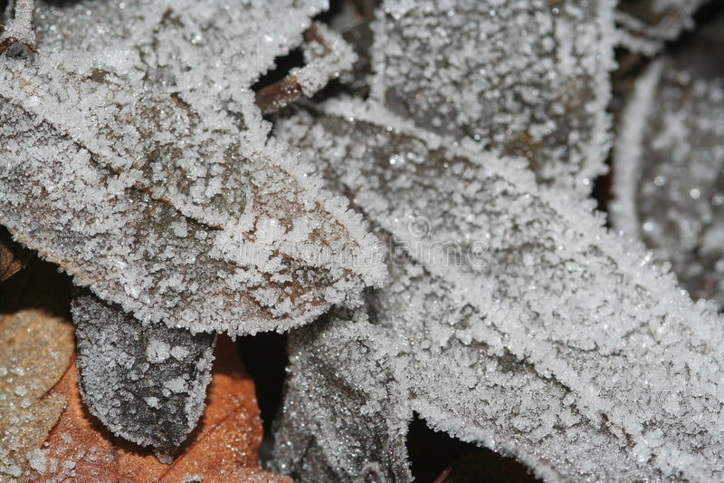 Folhas do inverno fotos de stock