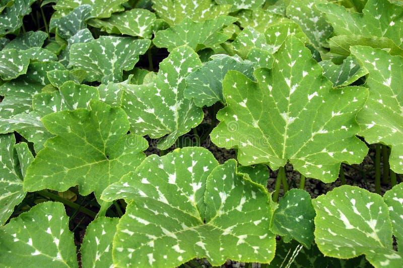 Folhas do jardim. imagens de stock