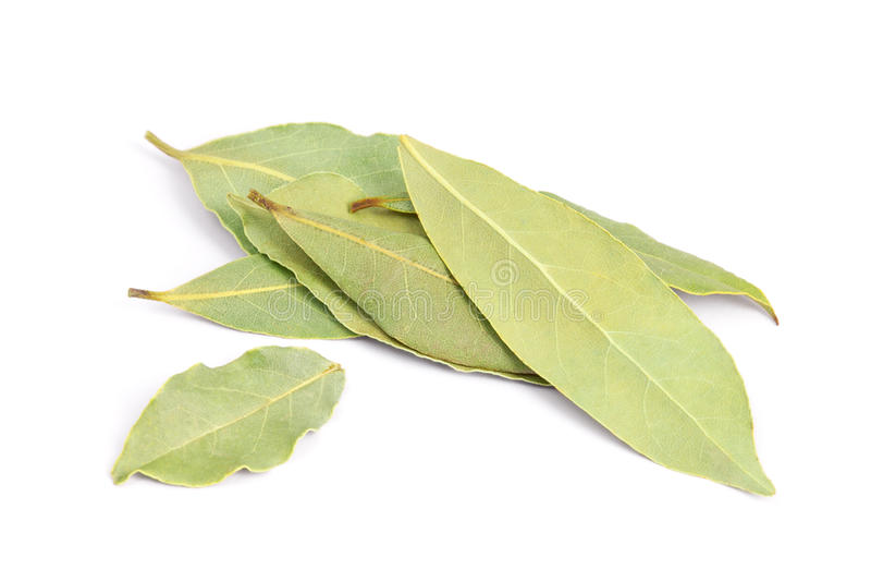 Folhas do louro no fundo branco. fotografia de stock