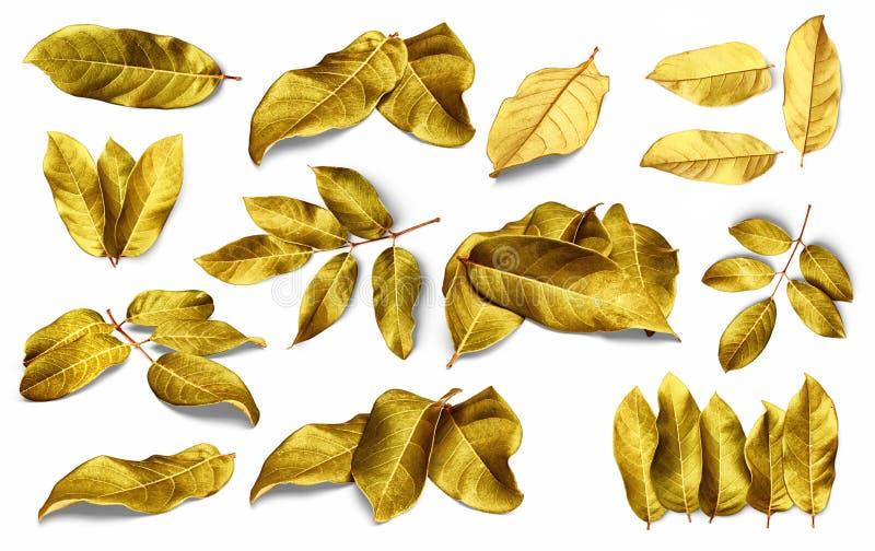 Folhas do ouro isoladas no fundo branco com trajeto de grampeamento foto de stock royalty free