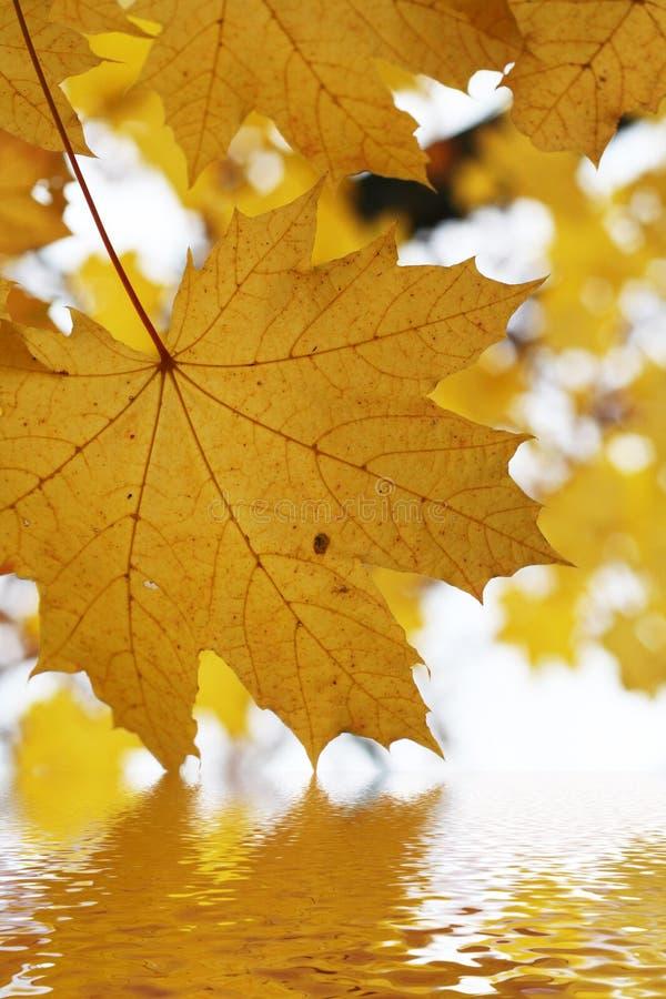 Folhas do outono acima da água fotografia de stock royalty free