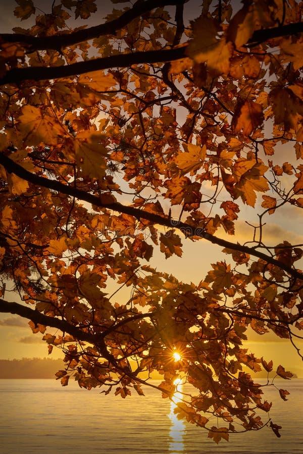 Folhas do por do sol, Stanley Park, Vancôver fotografia de stock royalty free