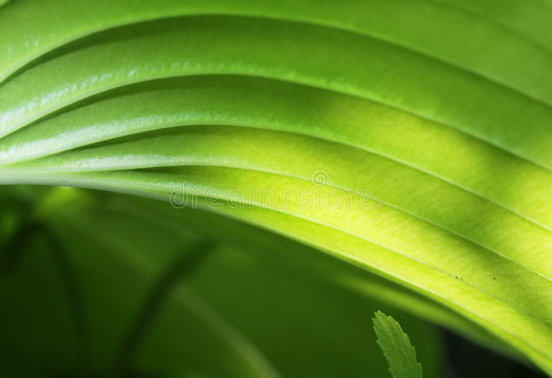 Folhas do verde foto de stock royalty free