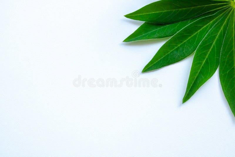 Folhas do verde do cartão em uma grama branca do fundo fotografia de stock