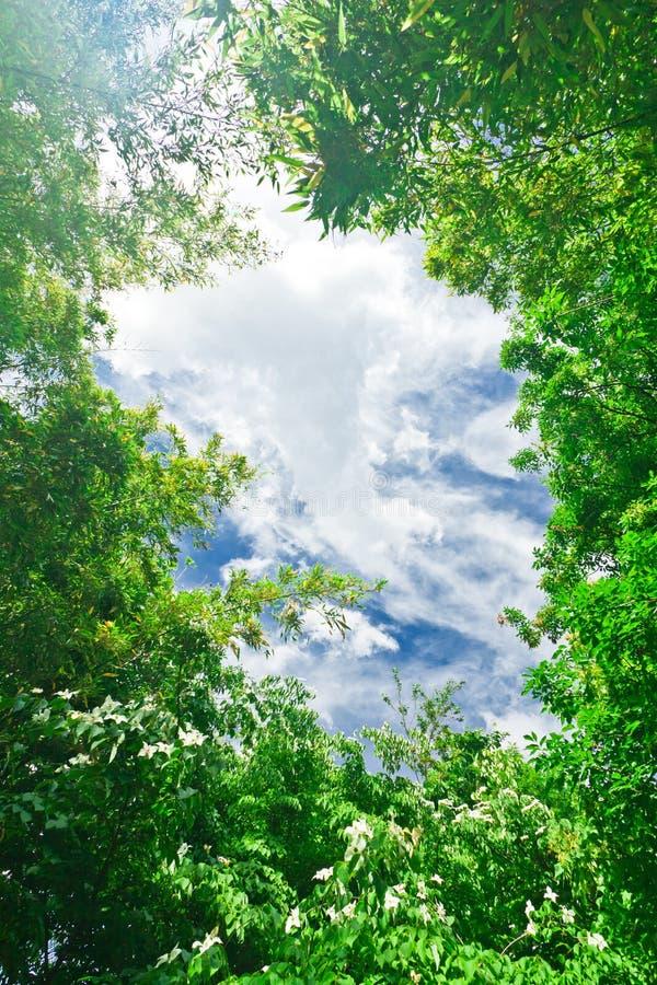 Folhas do verde com céu imagem de stock royalty free