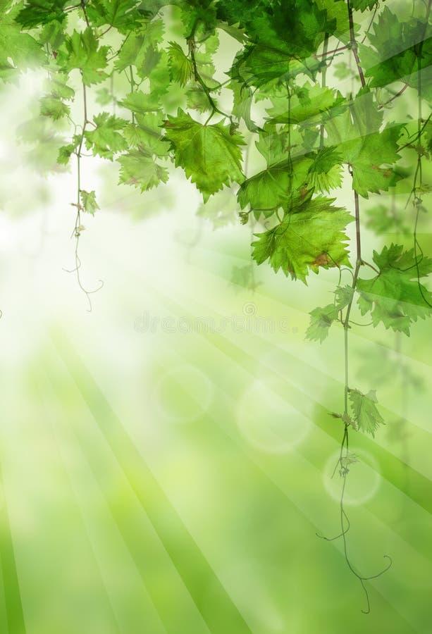 Folhas do verde com luz solar Fundo claro f?cil fotos de stock