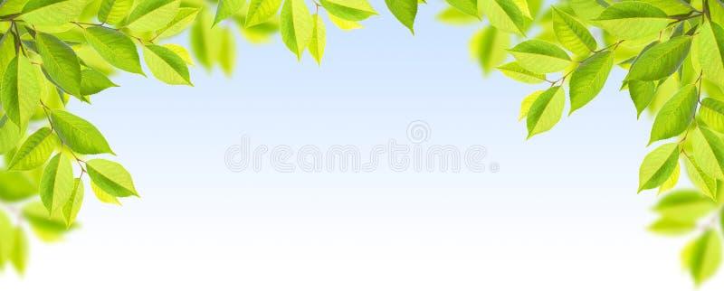 Folhas do verde da árvore no céu azul fotos de stock royalty free