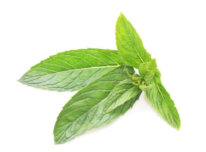 Folhas do verde da hortel? fotos de stock royalty free