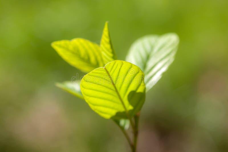 Folhas do verde da mola fotos de stock royalty free