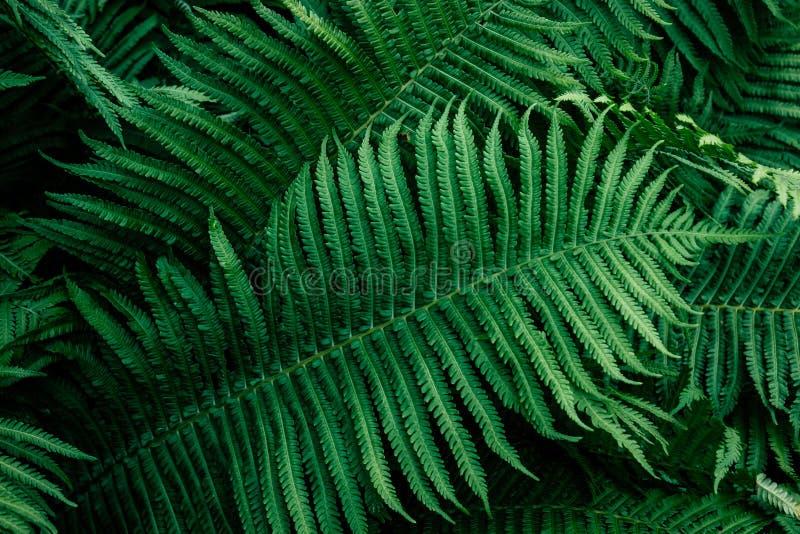 Folhas do verde da samambaia imagens de stock royalty free