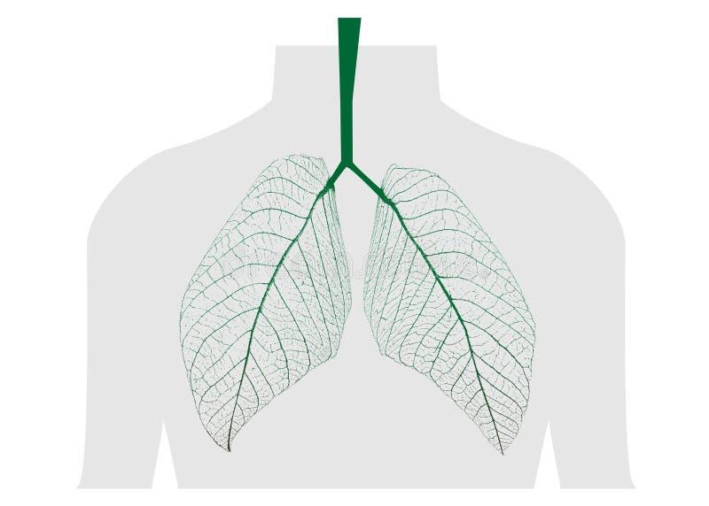 Folhas do verde do pulmão ilustração stock