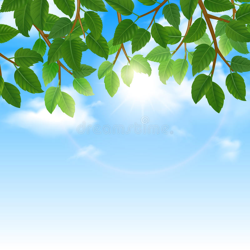 Folhas do verde e beira do fundo do céu ilustração stock