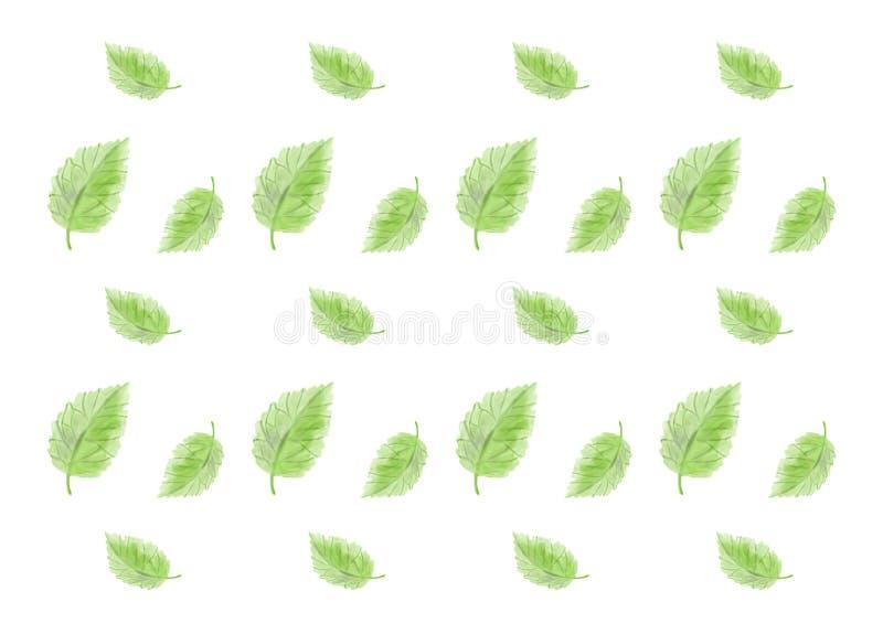 Folhas do verde em um fundo branco imagem de stock royalty free