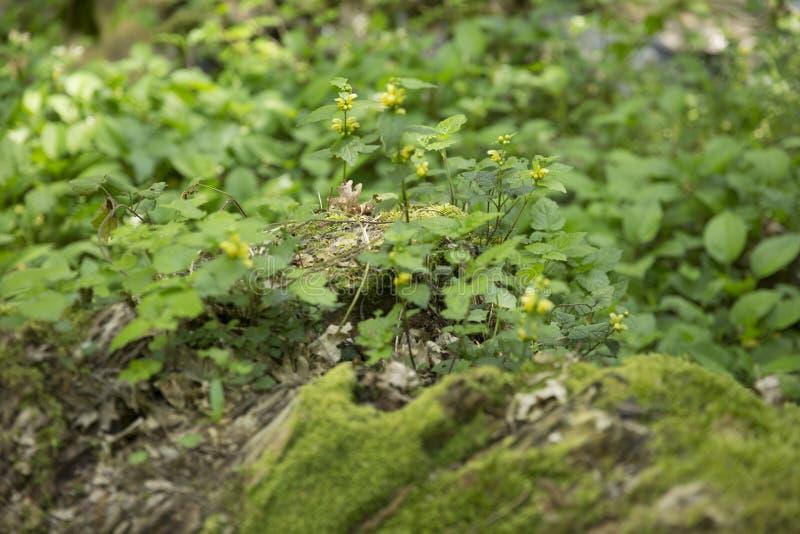 Folhas do verde em um prado fotos de stock