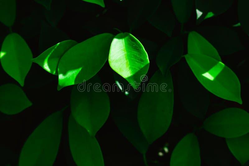 Folhas do verde do estilo do vintage Disposição criativa feita das folhas verdes Fundo verde da natureza com folhas imagens de stock royalty free