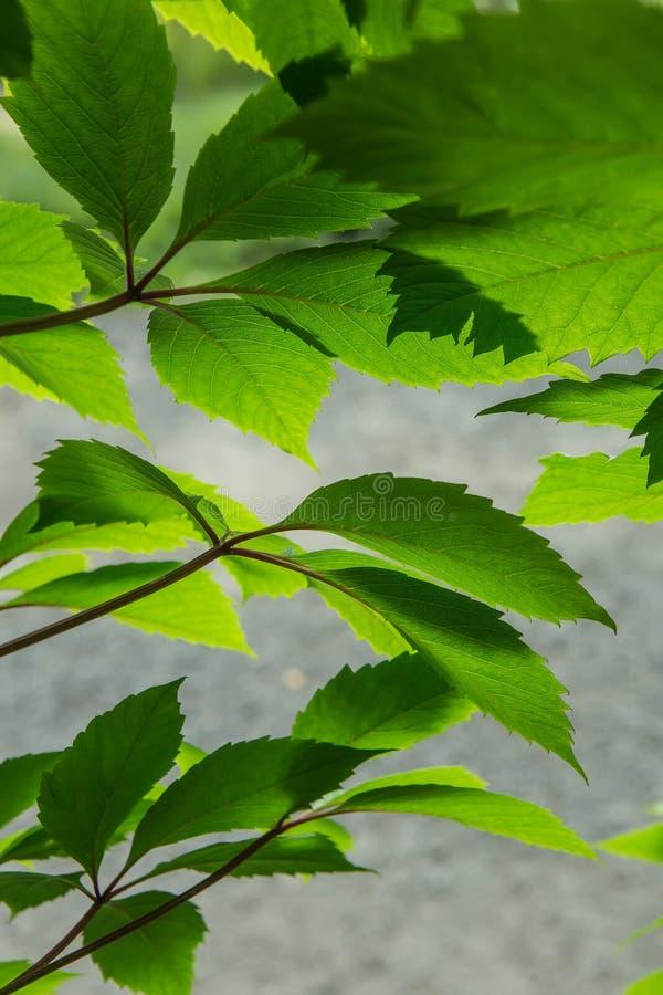 folhas do verde na luz solar brilhante fotos de stock royalty free