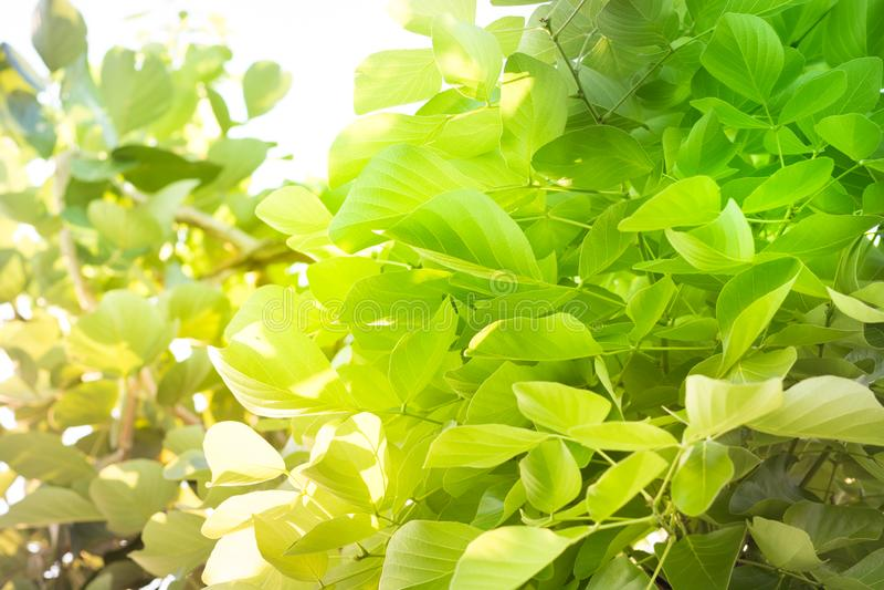 Folhas do verde na natureza com luz do sol clara fotografia de stock