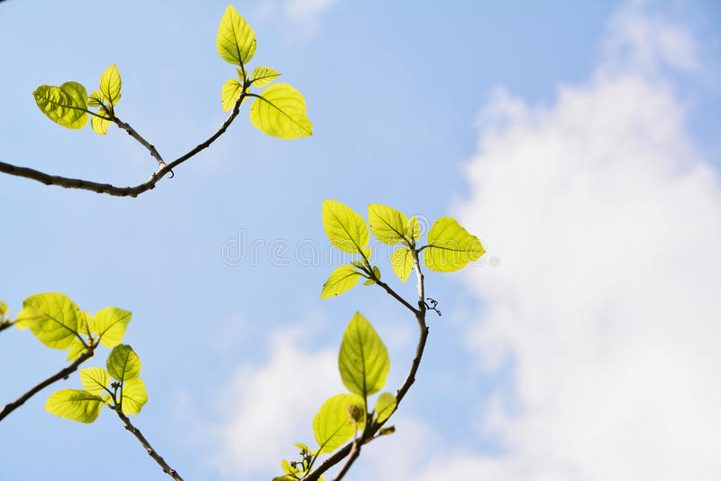 Folhas do verde no céu fotografia de stock royalty free