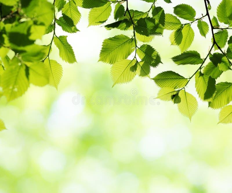 Folhas do verde no dia de mola ensolarado imagem de stock royalty free