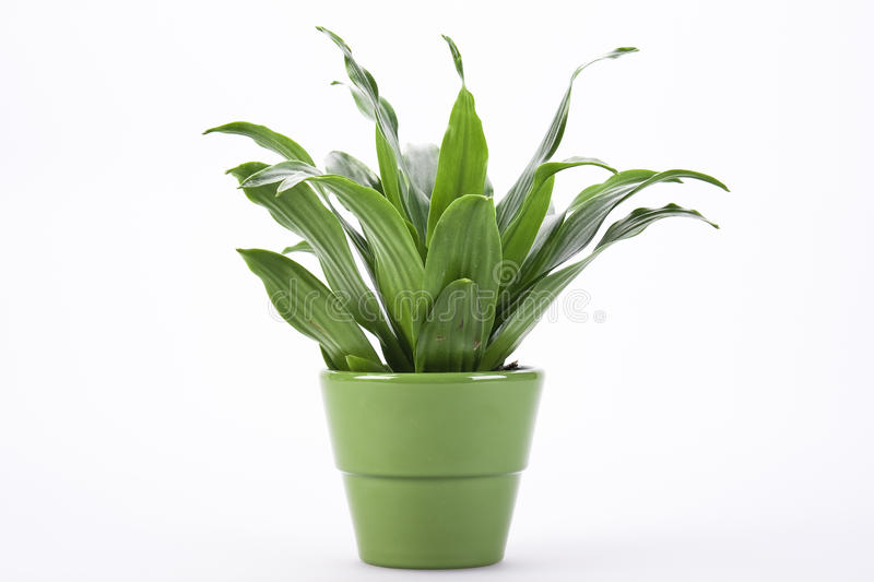 Folhas do verde no flowerpot fotografia de stock