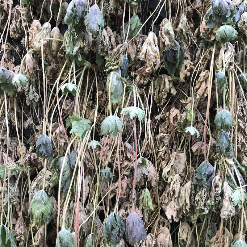 Folhas do verde no fundo do muro de cimento imagens de stock