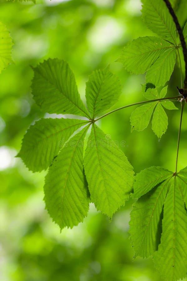 Folhas do verde no primeiro plano fotos de stock royalty free