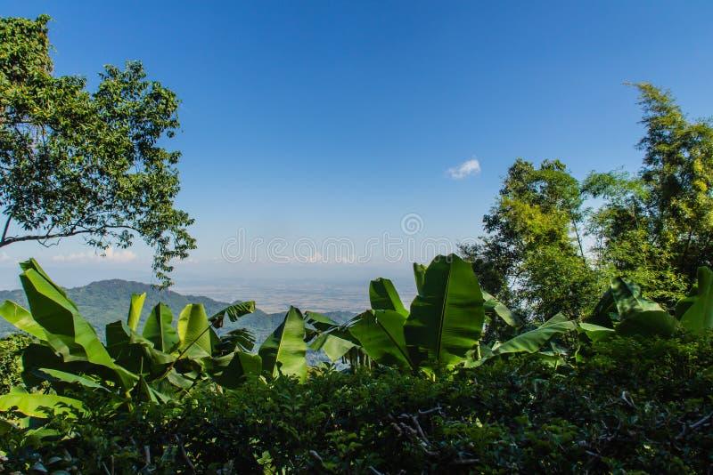 Folhas do verde do quadro da banana, do bambu e da árvore com fundo do céu azul e espaço da cópia O quadro da natureza da licença imagem de stock royalty free