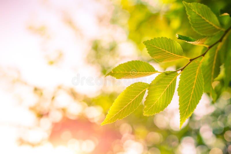 Folhas do verde sob a luz solar com fundo do bokeh fotografia de stock