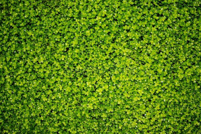 Folhas do verde - textura imagens de stock royalty free