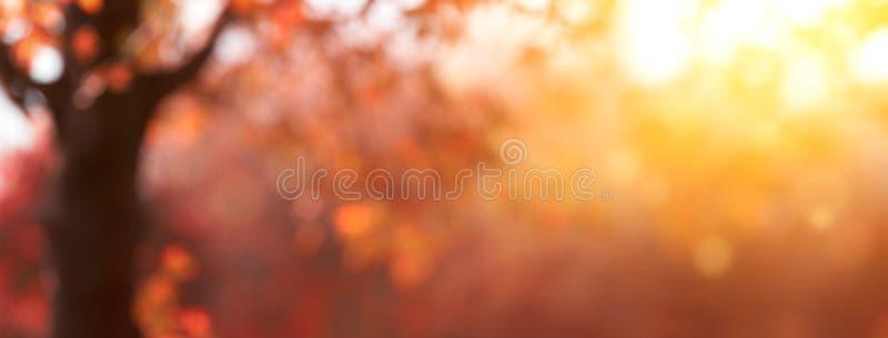 Folhas e árvores borradas de outono foto de stock royalty free