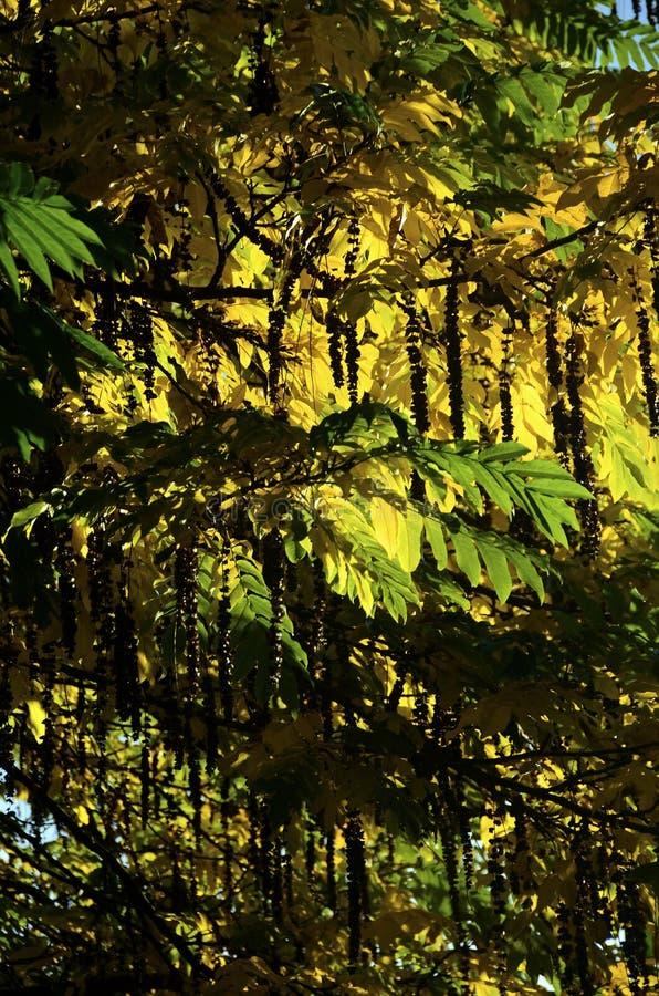 Folhas e árvores de outono foto de stock